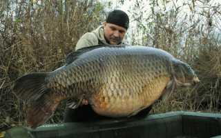Самая большая рыба пойманная в россии