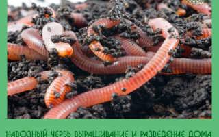 Разведение навозных червей в домашних условиях