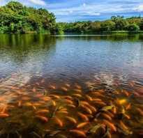 Рыбное озеро