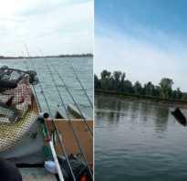 Снасти для ловли судака на спиннинг