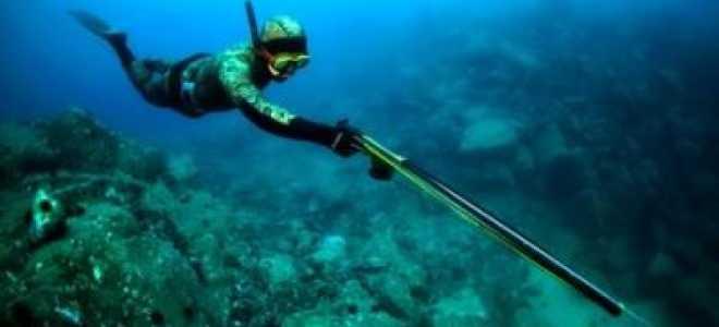 Что нужно для подводной охоты для начинающих