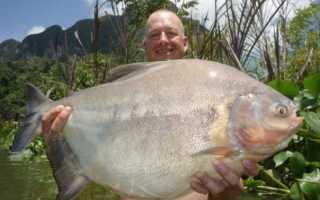 Рыба людоед