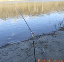 Фидерная ловля для начинающих