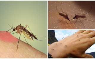 Польза от комаров