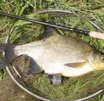 Рыбалка на леща летом
