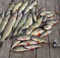 Рыбалка на волге фото