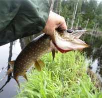 Сезон рыбалки