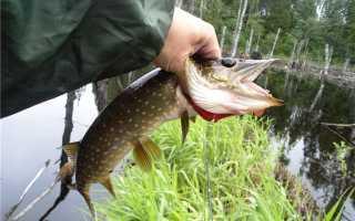 Рыболовный сезон