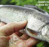 Сиговые рыбы список