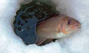 Рыбалка на хариуса в сибири