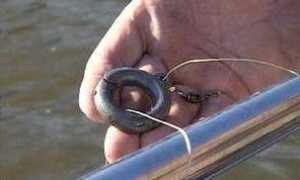 Прикормка для ловли на кольцо своими руками