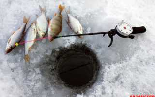 Чем подкормить опарыша для рыбалки