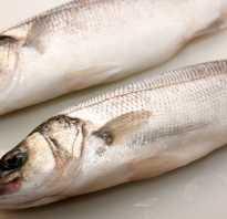 Рыба сибас фото