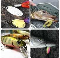 Рыбалка на щуку осенью