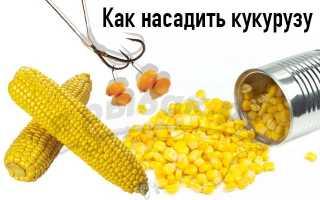 Силиконовая кукуруза для рыбалки