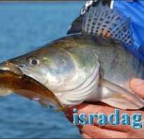 Чебурашка для рыбалки