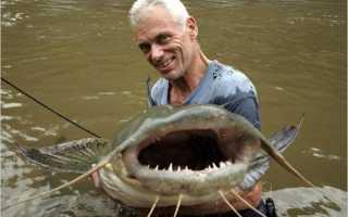 Рыбы которые едят людей