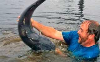 Рыбалка без удочки