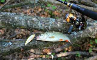 Рыбалка на голавля летом