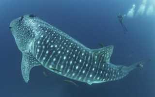 Огромная рыба фото