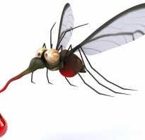 Что любят комары