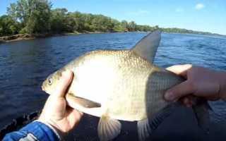 Рыбалка лещ