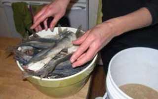 Сколько солить рыбу перед сушкой