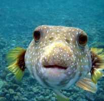 Фото морская собака