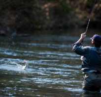 Эхолот для рыбалки с берега отзывы