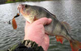 Рыбалка на вращающиеся блесны