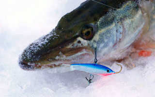 Способы ловли зимой щуки