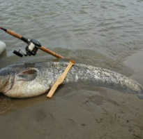 Рыбалка на квок
