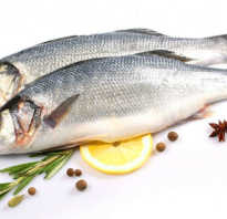 Рыба лаврак фото