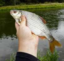 Рыбалка на плотву летом