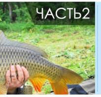 Фидерный монтаж видео
